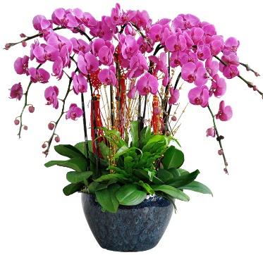 9 dallı mor orkide  Sivas cicek , cicekci