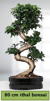80 cm özel saksıda bonsai bitkisi  Sivas çiçek gönderme sitemiz güvenlidir