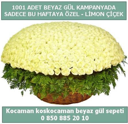 1001 adet beyaz gül sepeti özel kampanyada  Sivas online çiçekçi , çiçek siparişi