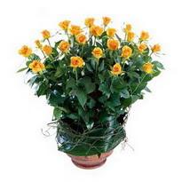 Sivas çiçek siparişi vermek  10 adet sari gül tanzim cam yada mika vazoda çiçek
