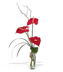 Sivas ucuz çiçek gönder  cam yada mika Vazoda 3 adet  antoryum