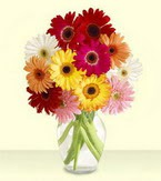 Sivas güvenli kaliteli hızlı çiçek  cam yada mika vazoda 15 özel gerbera