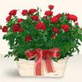 Sivas yurtiçi ve yurtdışı çiçek siparişi  11 adet kirmizi gül sepette