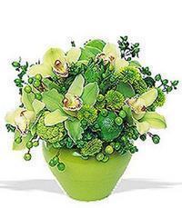 cam yada mika vazoda 5 adet orkide   Sivas kaliteli taze ve ucuz çiçekler