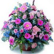 karisik mevsim kir çiçekleri  Sivas online çiçekçi , çiçek siparişi