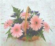 gerbera çiçeklerinde sepet   Sivas çiçek yolla , çiçek gönder , çiçekçi