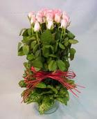 13 adet pembe gül silindirde   Sivas çiçek yolla , çiçek gönder , çiçekçi