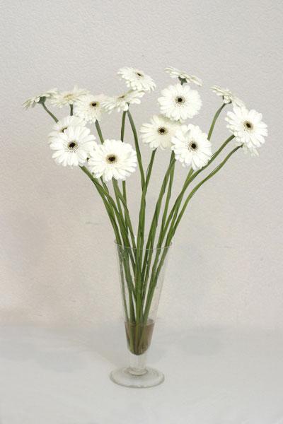 Sivas hediye sevgilime hediye çiçek  cam vazo içerisinde 17 adet sade gerbera