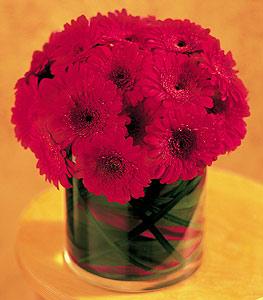 Sivas çiçekçi telefonları  23 adet gerbera çiçegi sade ve sik cam içerisinde