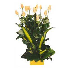 12 adet beyaz gül aranjmani  Sivas çiçek online çiçek siparişi
