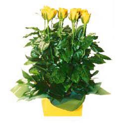 11 adet sari gül aranjmani  Sivas kaliteli taze ve ucuz çiçekler