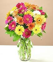 Sivas 14 şubat sevgililer günü çiçek  17 adet karisik gerbera