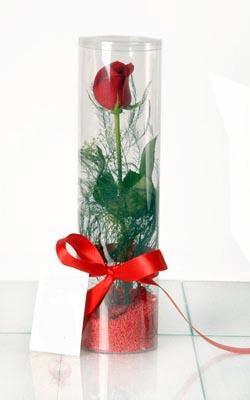 Sivas çiçek yolla , çiçek gönder , çiçekçi   Silindir vazoda tek kirmizi gül