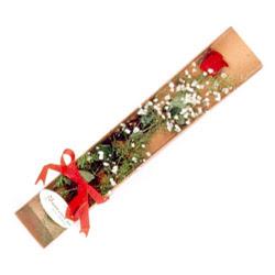 Sivas çiçek gönderme  Kutuda tek 1 adet kirmizi gül çiçegi