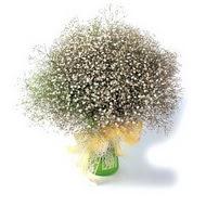 Sivas hediye sevgilime hediye çiçek  cam yada mika vazo içerisinde cipsofilya demeti