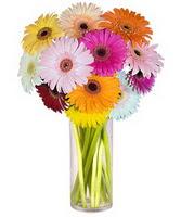 Sivas çiçek siparişi sitesi  Farkli renklerde 15 adet gerbera çiçegi