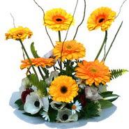 camda gerbera ve mis kokulu kir çiçekleri  Sivas çiçek gönderme sitemiz güvenlidir