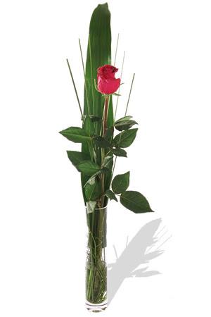 1 adet cam vazo içerisinde kirmizi gül  Sivas çiçek gönderme