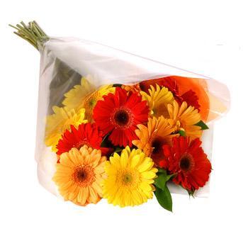 Karisik renklerde gerbera buketi  Sivas çiçek siparişi vermek