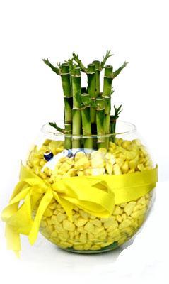 cam fanus içerisinde bambo  Sivas hediye çiçek yolla