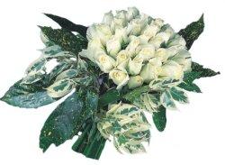 Sivas çiçek siparişi sitesi  9 Beyaz gül Özel kisiler için