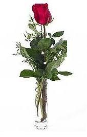 Vazo içerisinde 1 adet kirmizi gül  Sivas çiçek siparişi vermek