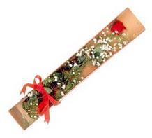 1 adet kirmizi gül  Sivas çiçek gönderme sitemiz güvenlidir