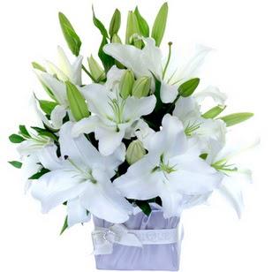 Sivas çiçek yolla , çiçek gönder , çiçekçi   2 dal cazablanca vazo çiçeği