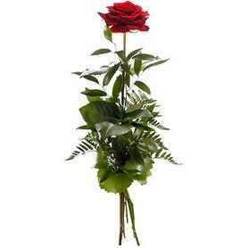 Sivas kaliteli taze ve ucuz çiçekler  1 adet kırmızı gülden buket