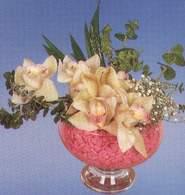 Sivas hediye sevgilime hediye çiçek  Dal orkide kalite bir hediye