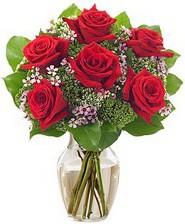 Kız arkadaşıma hediye 6 kırmızı gül  Sivas çiçek siparişi sitesi