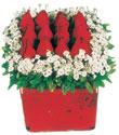 Sivas İnternetten çiçek siparişi  Kare cam yada mika içinde kirmizi güller - anneler günü seçimi özel çiçek