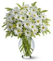 Vazo içerisinde beyaz krizantem çiçekleri  Sivas çiçek , çiçekçi , çiçekçilik
