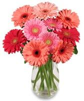 vazo içerisinde 13 adet gerbera çiçeği  Sivas ucuz çiçek gönder