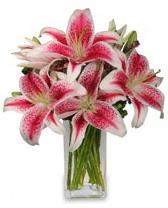 Vazo içerisinde 5 dal kazablanka çiçeği  Sivas çiçek siparişi vermek