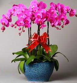 7 dallı mor orkide  Sivas 14 şubat sevgililer günü çiçek
