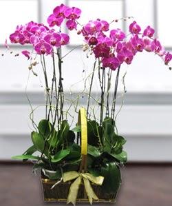 4 dallı mor orkide  Sivas çiçek servisi , çiçekçi adresleri