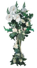 Sivas hediye sevgilime hediye çiçek  antoryumlarin büyüsü özel