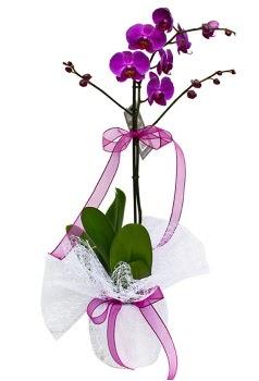 Tek dallı mor orkide  Sivas çiçek gönderme sitemiz güvenlidir