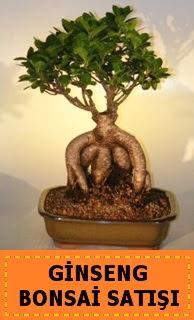 Ginseng bonsai satışı japon ağacı  Sivas internetten çiçek siparişi