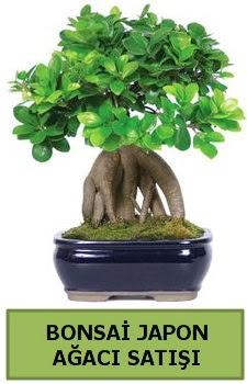 Bonsai japon ağacı satışı  Sivas çiçek yolla