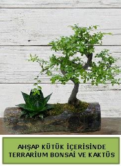 Ahşap kütük bonsai kaktüs teraryum  Sivas çiçek siparişi sitesi
