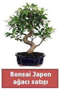 Japon ağacı bonsai satışı  Sivas ucuz çiçek gönder