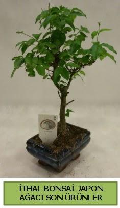 İthal bonsai japon ağacı bitkisi  Sivas uluslararası çiçek gönderme