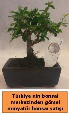 Japon ağacı bonsai satışı ithal görsel  Sivas çiçek yolla , çiçek gönder , çiçekçi