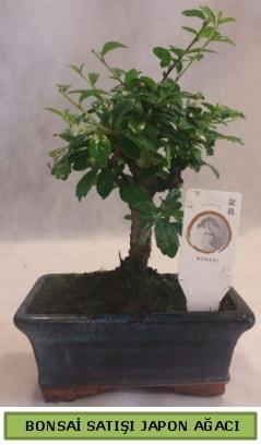 Minyatür bonsai ağacı satışı  Sivas İnternetten çiçek siparişi