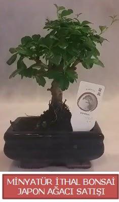 Küçük görsel bonsai japon ağacı bitkisi  Sivas çiçek gönderme