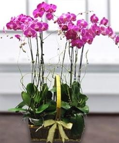 7 dallı mor lila orkide  Sivas online çiçekçi , çiçek siparişi