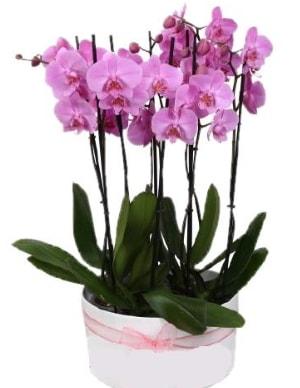 Beyaz seramik içerisinde 7 dallı mor orkide  Sivas çiçek gönderme sitemiz güvenlidir