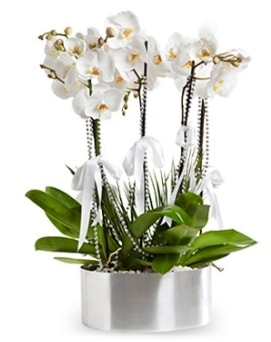 Beş dallı metal saksıda beyaz orkide  Sivas çiçek yolla , çiçek gönder , çiçekçi